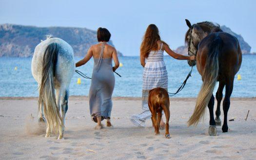 Platja Estartit cavalls platja Prínceps i Princeses a la platja de l'Estartit.