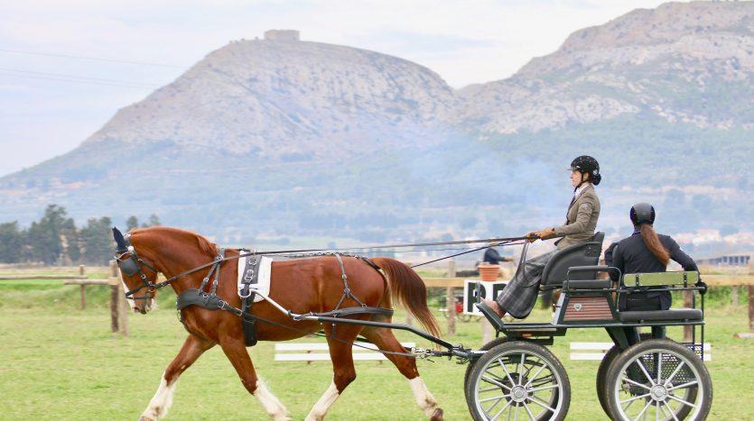 Rutes pel Parc Natural a Cavall - Hípica Mas Paguina. - Inmocosta API Estartit