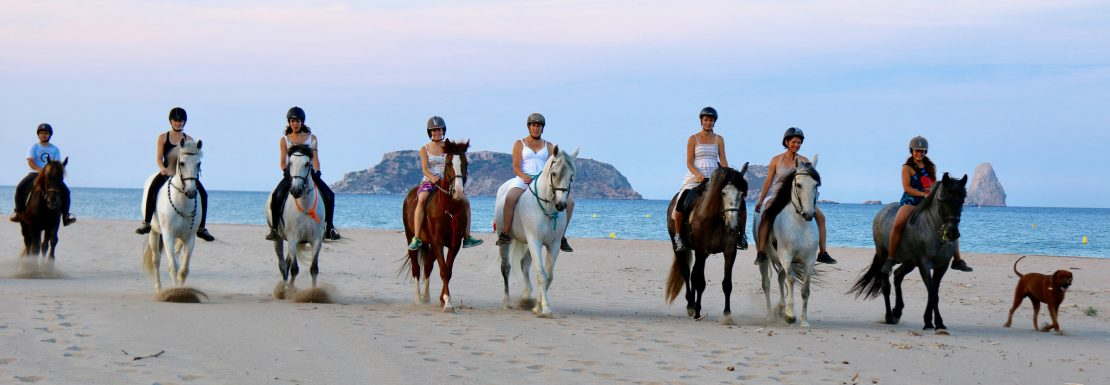 Come and discover the Natural Park in a very different way. The Hípica Mas Paguina offers excursions on horseback in this unique and special environmente of the Natural Park of Montgrí - Medes Islands and Baix Ter. Discover all the flora and fauna of the park by horse. They offer one hour long excursions, and they even offer, in the low season, five hour long excursions. They already have routs established, although they are always creating new ones.  They also organize fressage contests, birthday parties and they have a competition team that trains and competes regularly throughout the year. What are you waiting for? Come and join them.