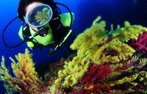 Illes Medes Les Illes Medes formen part del Parc Natural del Montgrí. Són actualment una de les reserves marines més importants de la Mediterrània occidental, així com un dels destins més apreciats en el móm del submarinisme. Les activitats nàutiques i subaquàtiques són variades i sempre respectuoses amb l'espai natural de les Illes Medes. A continuació deixem un seguit d'activitats diferents i divertides que es poden realitzar mentres es gaudeix d'aquest famós Parc Natural.
